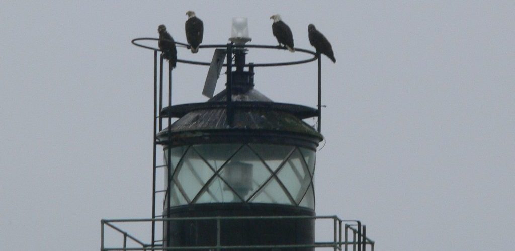 Four eagles perched on top of Guard Island Lighthouse